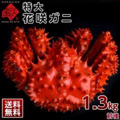 ≪特大サイズ≫花咲蟹 花咲ガニ(姿) 1.2-1.3kg前後 最高品質 冷凍 市場に出回らない大きさで食べ応え抜群!味の濃厚さは蟹の中で1番