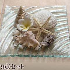 貝殻のリゾートコーデ9点セット 貝殻(5種類)(ヒトデ、ナチュラルストーン、プルメリア、ガラスプレート)   おしゃれ インテリア雑貨 海