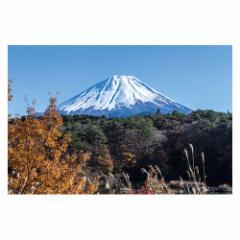 富士山ポストカード 精進湖から富士山を望む (YN-005) 当店オリジナル写真絵はがき