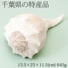 【半額・在庫処分】巻貝の置物2 インテリア飾り用 千葉県の特産品 Snail figurine, Chiba specialty products