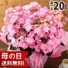 母の日 プレゼント ギフト 花 鉢植え アレンジ 花束 ブーケ イベントギフトC 2021 送料無料 メッセージカード アジサイ 花鉢 バラ ユリ