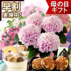 母の日 早割 ギフト プレゼント 花とスイーツ セット 鉢植え アジサイ あじさい 紫陽花 バラ ばら 薔薇 カーネーション メッセージカード