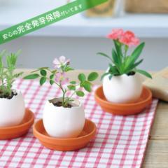 栽培キット 発芽保障 eggling eco friendly カーネーション ミニバラ 四葉のクローバー 栽培セット 聖新陶芸 かわいい