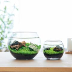 育てる水草 Sサイズ 栽培セット 発芽保障 栽培キット 和風庭園 グリーン いやし アクアリウム 聖新陶芸
