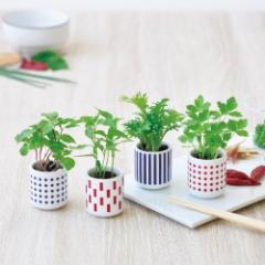 おちょこで薬味栽培セット 発芽保障 しそ とうがらし わさび菜 みつ葉  香草 聖新陶芸