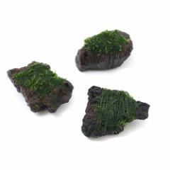 (水草)巻きたて ウィローモス 富士ノ溶岩石 ミニサイズ(約4〜6cm)(無農薬)(1個)