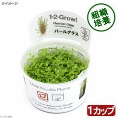 (水草)組織培養1−2−GROW! パールグラス トロピカ製(無農薬)(1カップ)