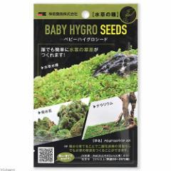 カミハタ 水草の種 ベビーハイグロシード