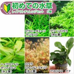 (水草)初めての水草 レイアウトチャレンジセット 5種(水上葉)