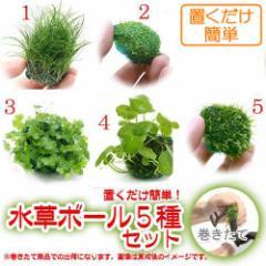 (水草)置くだけ簡単 水草ボール(無農薬)5種セット 熱帯魚 北海道航空便要保温