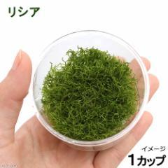 (水草)リシア(無農薬)(1カップ) 北海道航空便要保温