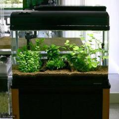 (水草 熱帯魚)おまかせ 2灯用レイアウトセット 流木付 60cm水槽用 6種(無農薬) 水草説明書付 北海道航空便要保温