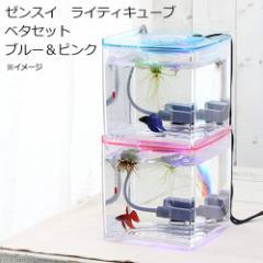 (熱帯魚)(水草)ゼンスイ ライティキューブ2台&ベタ2匹 セット ブルー&ピンク 本州四国限定