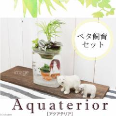 (熱帯魚)(水草)私のアクアリウム アクアテリア P110 ベタ飼育セット(生体・植物・ヒーター付き)おしゃれ水槽セット 本州・