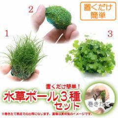 (水草)置くだけ簡単 水草ボール(無農薬)3種セット