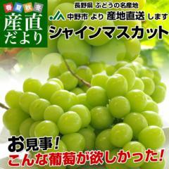 送料無料 長野県より産地直送 長野県JA中野市 シャインマスカット 約2キロ (3から4房) ぶどう ブドウ 産直だより
