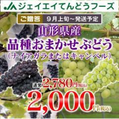 【秀品☆ギフト】 山形県産 ぶどう キャンベル または ナイヤガラ 約2kg 9月上旬〜順次出荷