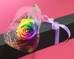【誕生日】 【花】 【送料無料】ブラックBOXレインボーローズ生花一輪  プレゼント 女性 花 お返し