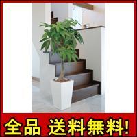 【送料無料!ポイント10%】おしゃれ空間を演出!【アートグリーン】ロイヤルパキラ1.35m