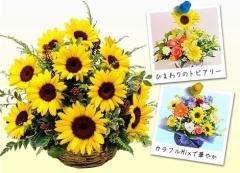 遅れてごめんね!父の日【誕生日】 【花】 【送料無料】★ひまわりのお花でデザイナーオーダー 【女性】