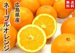 【送料無料】広島県産 ネーブルオレンジ 10kg 2Lサイズ 約35玉/尾道市瀬戸田町