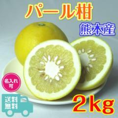 ギフト用 パール柑 2kg 熊本産 秀品 サイズおまかせ  送料無料 くまモン箱 文旦 大橘 サワーポメロ