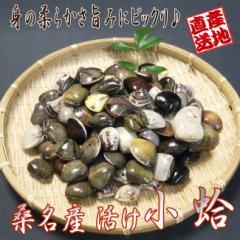 はまぐり 桑名産小蛤 [800g] 国産活け小はまぐり 手掘りだから活きが良い!   |パスタ/潮汁/ギフト/ハマグリ/魚介類/貝[いなべ冷蔵]