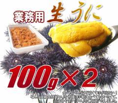 送料無料 業務用 冷凍生うに200g(100g×2) 【rk】