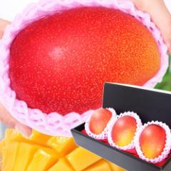 母の日 ギフト 特大宮崎マンゴー 3玉 化粧箱入り 送料無料 完熟/宮崎産プレミアムマンゴー/フルーツ/果物/贈答/早割