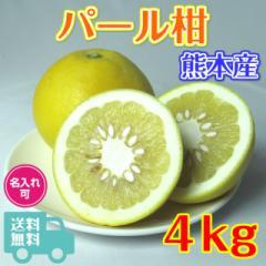 ギフト用 パール柑 4kg 熊本産 秀品 サイズおまかせ 送料無料 くまモン箱 文旦 大橘 サワーポメロ