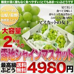 送料無料 シャインマスカット 2kg 3〜5房 皮ごと食べられる人気の種無しぶどうです