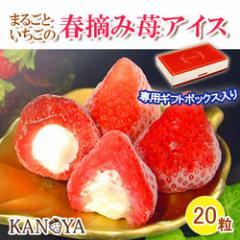 KANOYA/春摘み苺アイスクリーム(20粒入)送料無料 内祝い 母の日 ギフト お中元 お歳暮 スイーツ アイス 苺