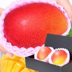 母の日 ギフト 特大宮崎マンゴー 2玉 化粧箱入り 送料無料 完熟/宮崎産プレミアムマンゴー/フルーツ/マンゴー/果物/贈答/早割