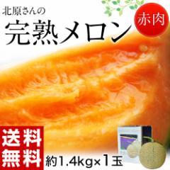 《送料無料》北海道産 北原さんの「完熟メロン」 化粧箱入 1玉 約1.4? ※常温