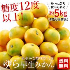送料無料 和歌山県産  糖度12度以上 ゆら早生 みかん Mサイズ 約5kg (約50玉前後) フルーツ 旬 果物 どっさり まとめて お得