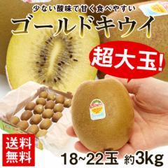 果物  キウイ 送料無料 超特大 ゴールドキウイ 約3kg キウイフルーツ 大玉 kiwi フルーツ 旬 (gc)