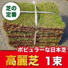高麗芝(コウライシバ) 1束 芝生 グランドカバー ポピュラーな日本芝