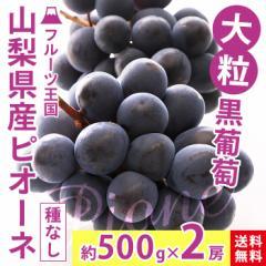 ぶどう ブドウ 送料無料 フルーツ 山梨県産 大粒 種なしピオーネ2房 家庭用 贈答 ギフト(gc)