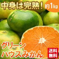 みかん ミカン 送料無料 フルーツ 蜜柑 みかん グリーンハウス 1kg ハウスミカン(gn)