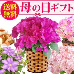 早割 母の日ギフト 選べる鉢植えとスイーツセット 鉢花 送料無料 [E]