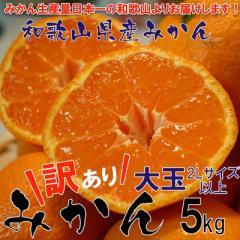 和歌山県産 訳ありみかん 大玉(2Lサイズ以上) 5kg【送料無料】※10月中旬頃より発送開始
