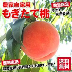 ギフト 送料無料 フルーツ 果物 農家自家用 長野県産もぎたて桃 約2kg フルーツ 果物 もも  訳あり ワケ わけ