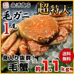 【送料無料】毛ガニ 超特大1尾 約1.1kg ロシア産 冷凍便 毛蟹 毛がに ケガニ 父の日ギフト