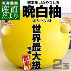 熊本県より産地直送 JAやつしろ 晩白柚 超大玉 2玉入り 4キロから5キロ 送料無料 ばんぺいゆ 最大級 柑橘 八代 産直だより