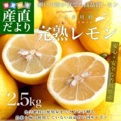 香川県から産地直送 JA香川県 完熟レモン 約 2.5キロ (20玉から25玉前後) 送料無料  柑橘 檸檬 国産レモン 産直だより
