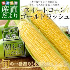 宮崎県より産地直送 JA宮崎中央 ハウス栽培 とうもろこし (ゴールドラッシュ) 2LからLサイズ 4.5キロ (13本から15本) 送料無料 ※クール