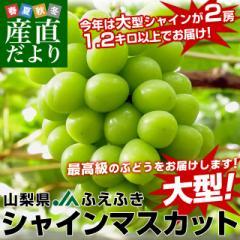 送料無料 山梨県より産地直送 JAふえふき 大型シャインマスカット 合計1.2キロ以上(大房2房入り) ぶどう 葡萄 ブドウ