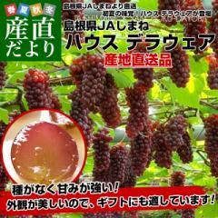 島根県より産地直送 JAしまね ハウスデラウェア 赤秀 Lから2Lサイズ (6房から7房) 1キロ化粧箱入り ぶどう 葡萄 送料無料  産直だより