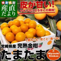 宮崎県から産地直送 JA宮崎中央 たまたま 2Lサイズ 1キロ (約40玉) 送料無料 きんかん 金柑 完熟きんかん 産直だより