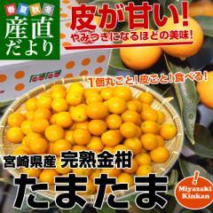 宮崎県から産地直送 JA宮崎中央 たまたま 2Lサイズ 3キロ (約120玉) 送料無料 きんかん 金柑 完熟きんかん  産直だより